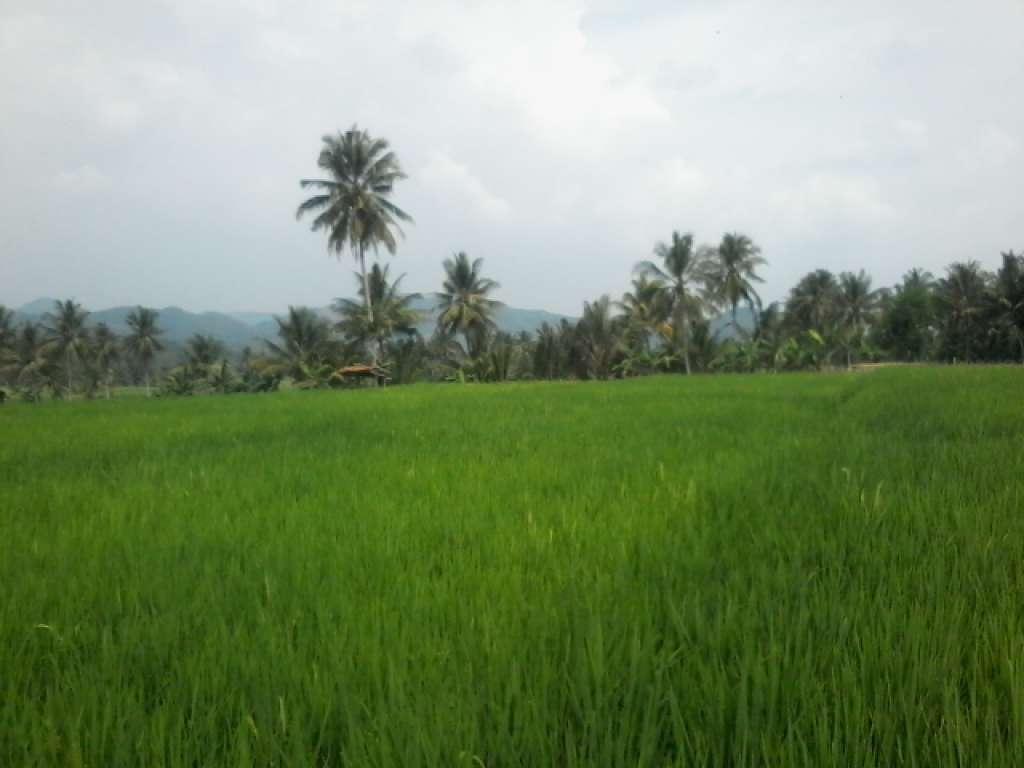Strategi Pengendalian Alih Fungsi Lahan Pertanian