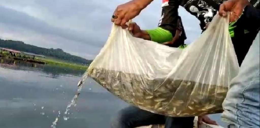 Pulihkan Ekosistem, Komunitas Mancing BMWC Tanam Ribuan Benih Ikan