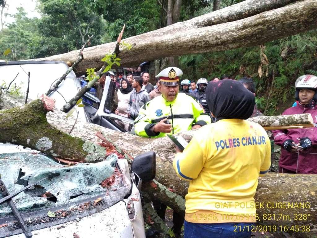 Dua Pohon Mahoni Tumbang Kejalan Menimpa Satu Unit Mobil Grand Max