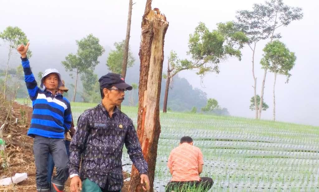 Cianjur Menuju Sentra Bawang Putih, BPSBTPH Jabar Monitoring Proses Penanaman